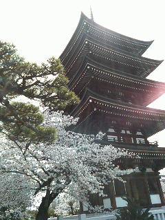 覚王山日泰寺 桜と五重塔